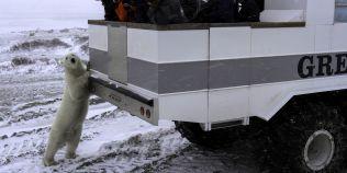 FOTO VIDEO Hotelul alb pe roti care ii duce pe turisti la intalnirea cu ursii polari