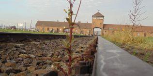 Auschwitz 1945 - Trenul si gara ca spatii ale mortii