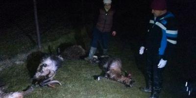 FOTO Animale otravite pe islazul comunal, la Doicesti. Satenii spun ca o cisterna a deversat o substanta necunoscuta