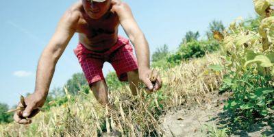 Ponta: Mi-e teama ca seceta si problemele din agricultura vor afecta cresterea economica spre sfarsitul anului
