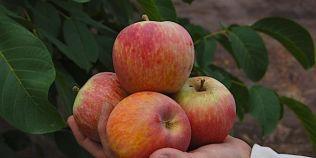 Secretul desertului din copilarie. Cea mai buna reteta de prajitura cu mere