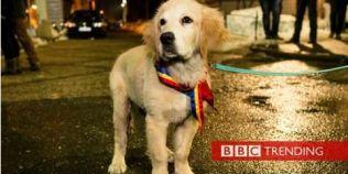 BBC: Cum au ajuns simpaticii caini un simbol al protestelor din Romania